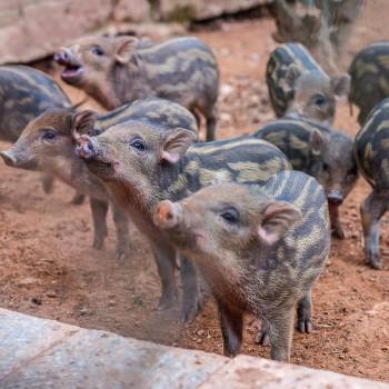 Deník z Vietnamu #4 Na farmě a v paláci