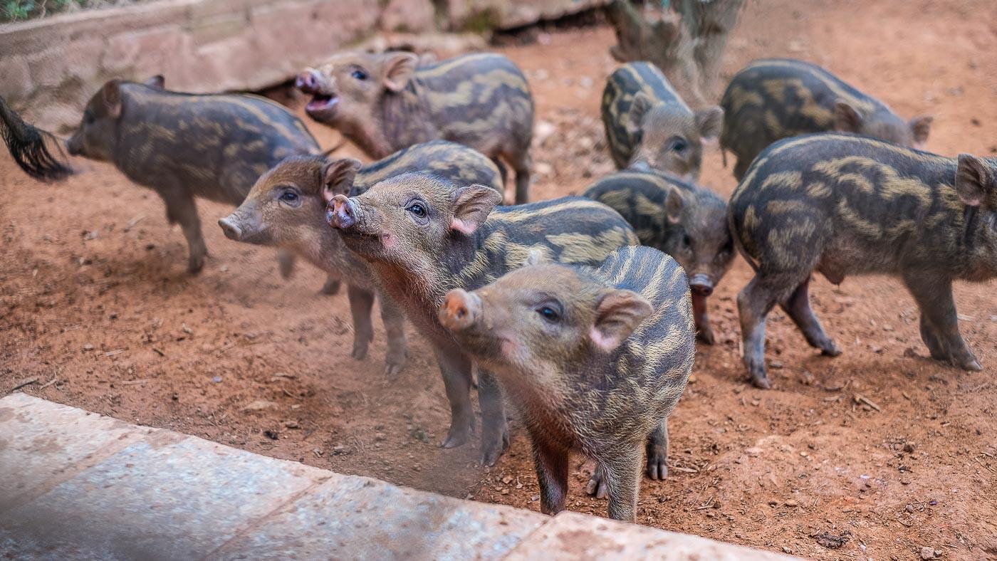 Deník zVietnamu #4 Na farmě avpaláci