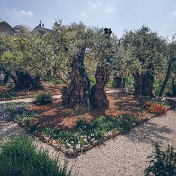Jerusalem - Getsemanská zahrada